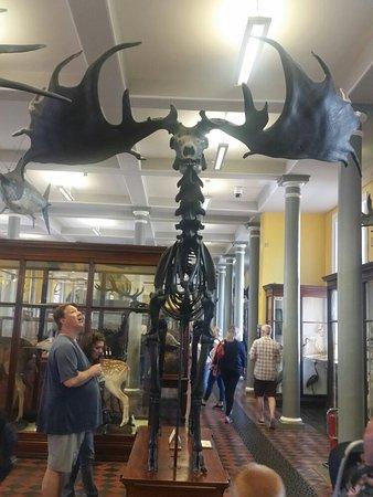 National Museum of Ireland - Natural History : 20160717_144053_large.jpg