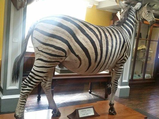 National Museum of Ireland - Natural History : 20160717_144716_large.jpg