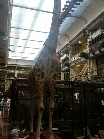 National Museum of Ireland - Natural History : 20160717_144504_large.jpg