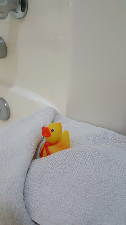 Rodeway Inn: rubber ducky included