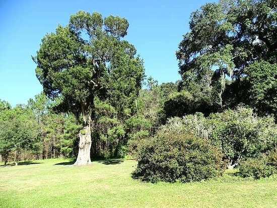 Mount Pleasant, SC: the grounds