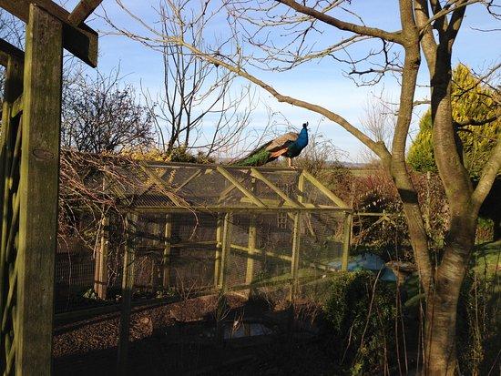 Coxley, UK: photo1.jpg