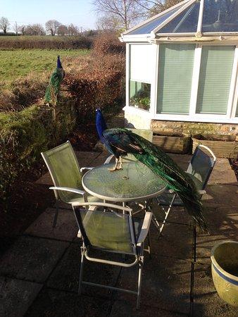 Coxley, UK: photo2.jpg
