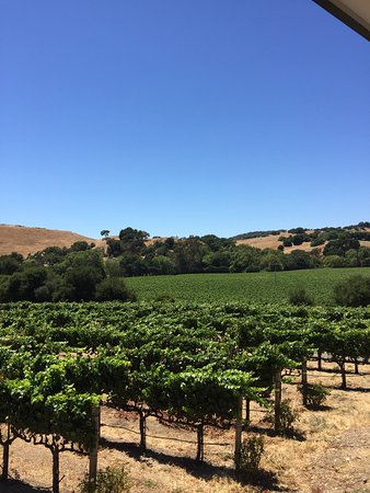 Napa Valley Wine Country Tours: photo1.jpg