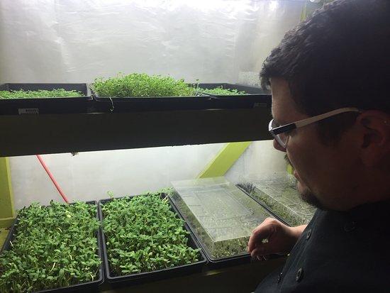 Γουάλα Γουάλα, Ουάσιγκτον: Chef Grant with his herbs.