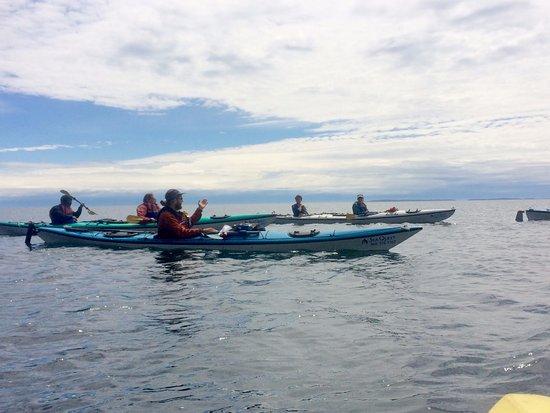 Friday Harbor, WA: Sam explaining Orcas