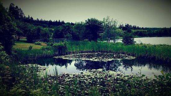 New Glasgow, Καναδάς: Lily pond