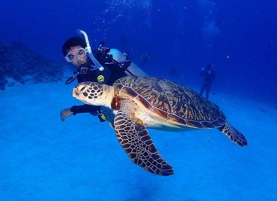 Honu Honu Divers