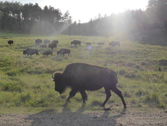 Custer State Park: photo3.jpg
