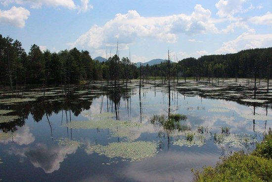 Adirondack Scenic Railroad : View of a beaver dam en route