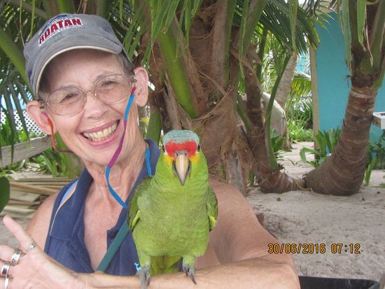Placencia, Belize: The island mascot, Polly.