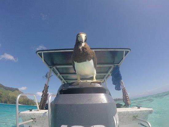 Haapiti, Polinesia Francesa: Boat skipper
