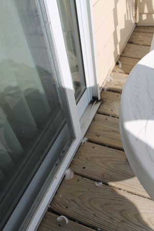 Quality Inn Lakefront: Balcoy dirty - is not the seagulls fault, but hotel