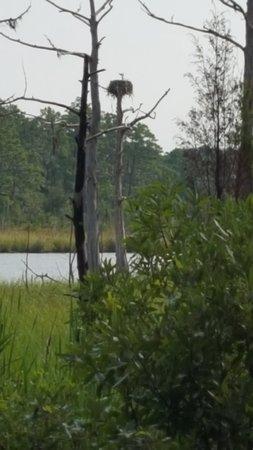 Washington, Carolina del Norte: Eagle's Aerie