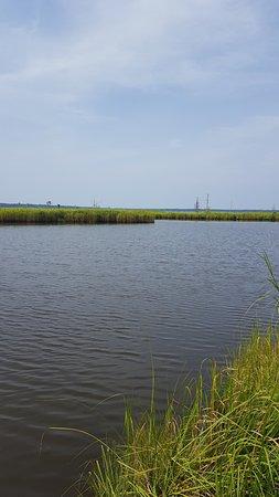 Washington, Carolina del Norte: Goose Creek Tidal Marshes