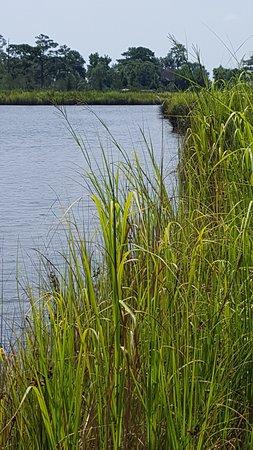 Washington, Caroline du Nord : Mallard Creek