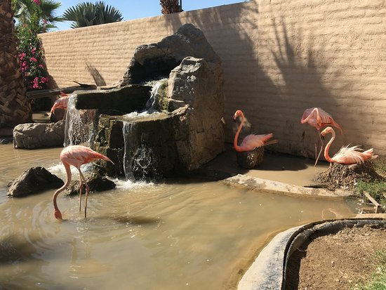Litchfield Park, AZ: View of the flamingos if you dine outside