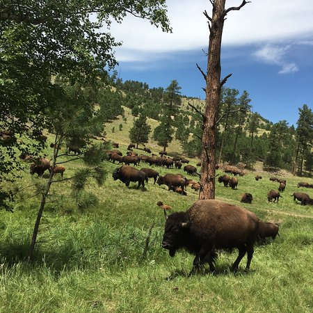 Custer State Park: photo0.jpg