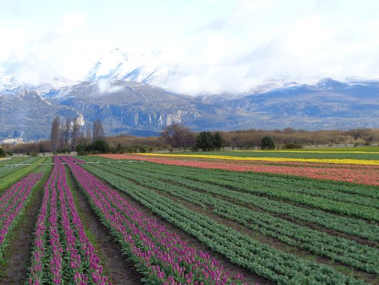 Top 6 Things to do in Trevelin, Argentina