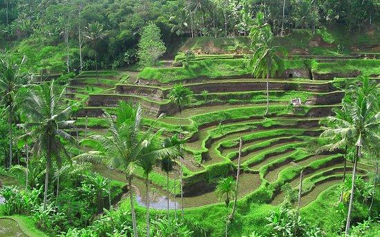 Bali Villages
