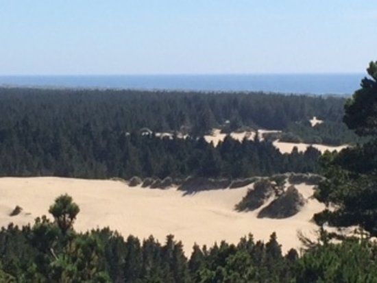 "Florence, OR: Sand out in the middle of ""forests."""