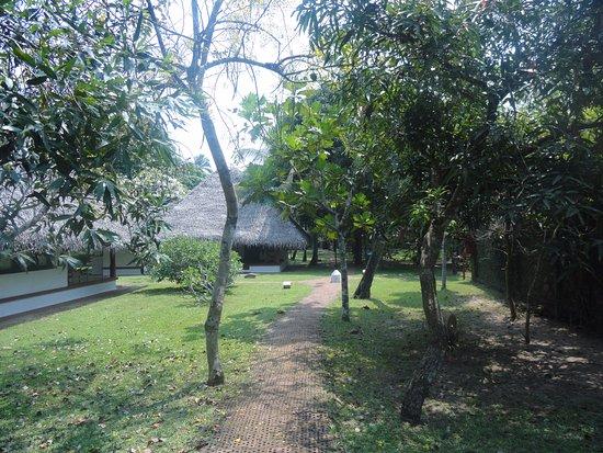 Marari Beach Resort: Cottages