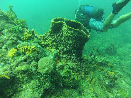 Pointe-Noire, Guadeloupe: plongée sur le gros morne (déshaies)