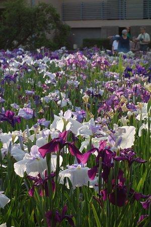 Foto de Horikiri Shobu Garden
