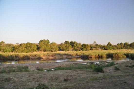 Sabie River Bush Lodge: Vue sur la rivière