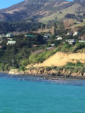 Akaroa, Νέα Ζηλανδία: Stunning view from the boat