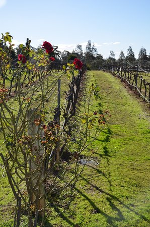 Rothbury, Australia: All Hunter Wine Tours
