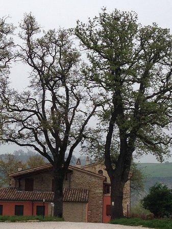 San Lorenzo in Campo照片