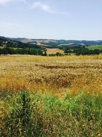 Agriturismo La Mela : photo0.jpg