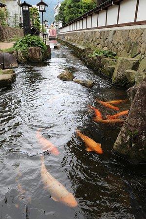 Hida, Japan: 鯉が沢山