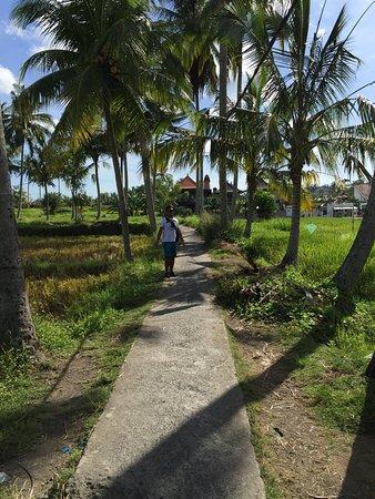 chemin pour accéder à Sari organik
