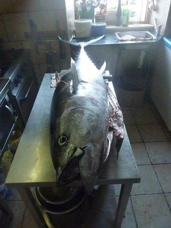 Sali, Хорватия: fresh tuna