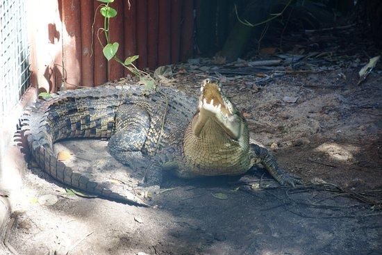 Green Island, Australien: Marineland 4