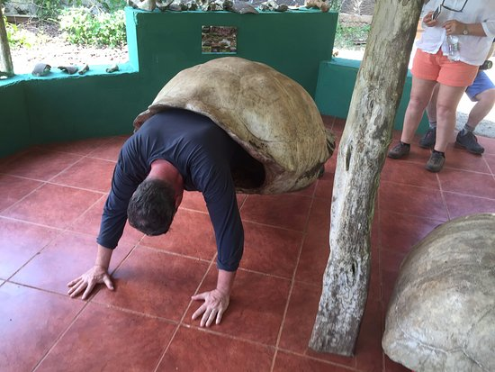 Santa Cruz, Ecuador: You too can be a tortoise!