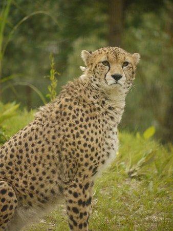 Biotropica la Serre Zoologique