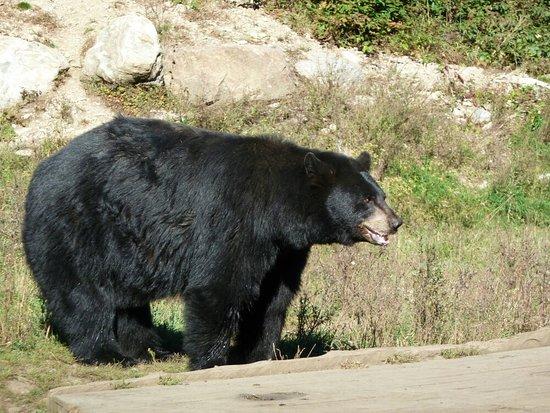 Montebello, Kanada: So close to the animals
