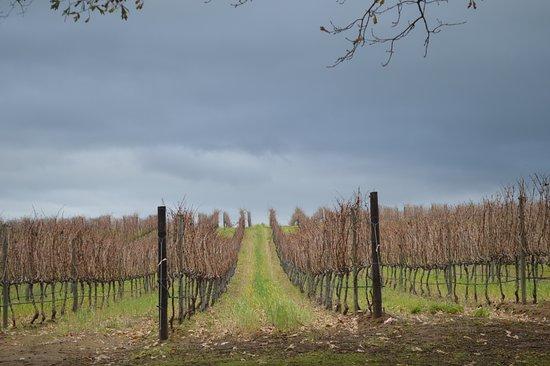 Constantia, Güney Afrika: Grapeyard
