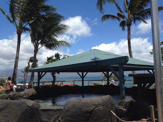 Wailuku, Hawaje: Sting ray exhibit