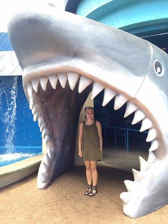 Wailuku, Hawaje: Entering shark exhibit