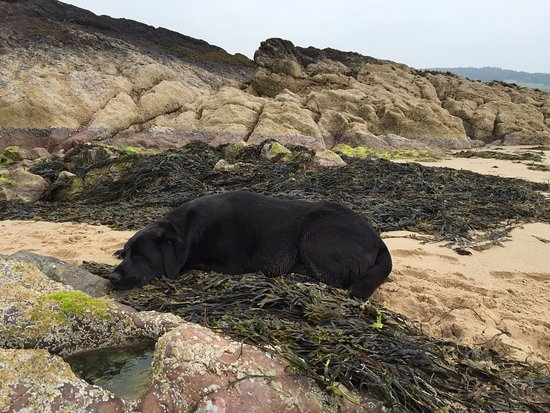 Moelfre, UK: Snoozing dog after a hard walk on the large Traeth Lliwgy