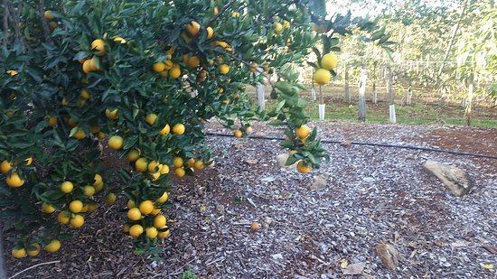 Duranbah, Australia: Tropical Fruit World