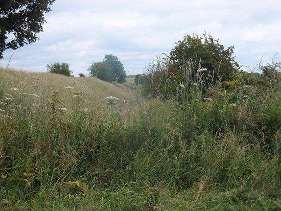 Wiltshire, UK: Segsbury Camp