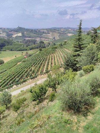 Vinchio, Ιταλία: IMG_20160723_135534_large.jpg