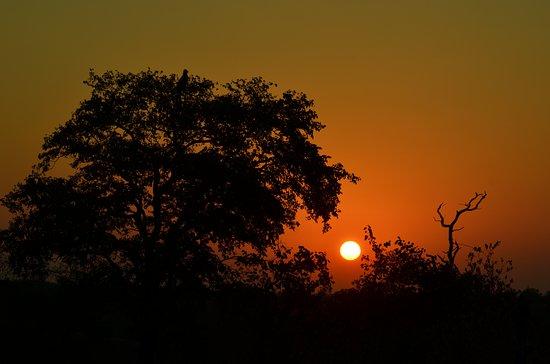 Timbavati Private Nature Reserve Foto