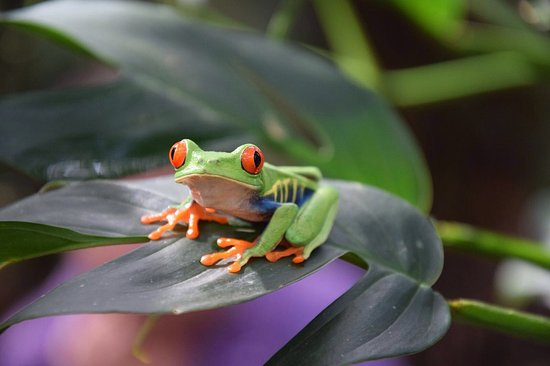 Frogs Heaven: Green without other colors when asleep!