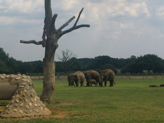 Dunstable, UK: Elephants